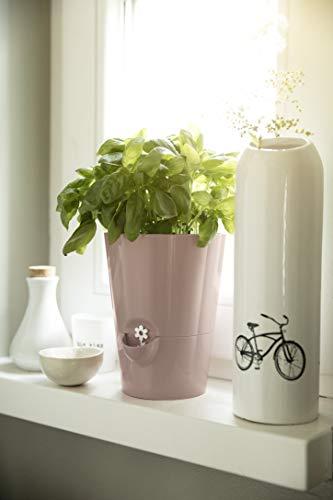 Emsa Kräutertopf für frische Kräuter, Selbstbewässerung, Wasserstandsanzeiger, Ø 13 cm, Seidengrau, Fresh Herbs, 517532 - 8